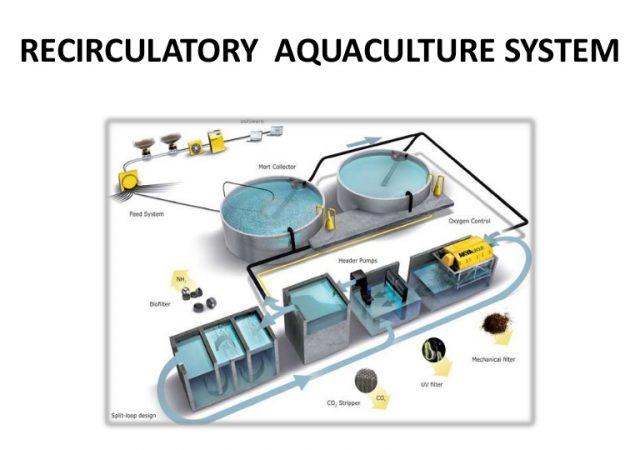 Pure Blue Fish establishing operations in Orangeburg County